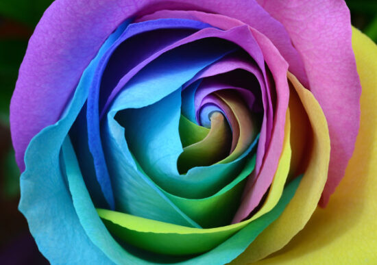 プリザーブドフラワーのプレゼントをクリスマスに贈りたい!生花との違いと相場は?