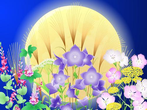 秋の七草に順番はある?意味は何?春の七草との違いは?