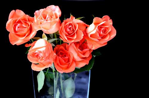 母の日は義母と実母で違いがある?相場と60代の方におすすめのプレゼントをご紹介!