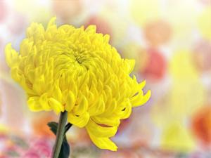 墓参りの花は当日持ち帰りがルール?一般的な片付け方は?